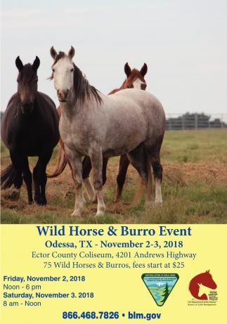 Wild Horse & Burro Event